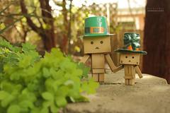 Go Green for Paddy's Day! (.•۫◦۪°•OhSoBoHo•۫◦۪°•) Tags: irish green love kawaii leprechaun odc saintpatricksday paddysday danbo amazoncojp cardboardrobot revoltech canoneos40d danboard minidanbo ifyoureluckyenoughtobeirishyoureluckyenough danbophotography notpattys irishdanbos