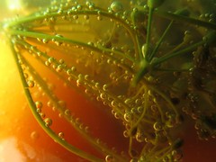 Fantasia on a tomato and dill topic. :)   (series) (halina.reshetova) Tags: red summer macro green yellow canon dill mixed tomatoes july bubbles greens blended summertime miscellaneous fennel glassjar salting saariysqualitypictures 170313 canonpowershotsx130is creativephotocafe