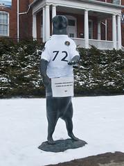 The Bear (Bruce Shapka) Tags: bear guelph 72 kovach