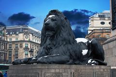 Trafalgar's lion (VoyagerX) Tags: england london statue lion trafalgar trafalgarsquare leone statua londra inghilterra
