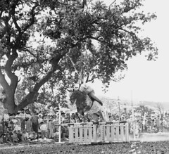 Slim Pickens on jump course (ConejoThruTheLens) Tags: horses appaloosa thousandoaks conejovalleydays conejothroughthelens