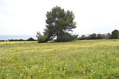 (Carey Mahoney) Tags: landscape mallorca sacoma puntadenamer nikond5100