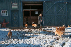 JMB_20130321_204.jpg (Headwaters-Aero) Tags: newyork unitedstates amenia cariwithherpackoficelandicsheepdogs