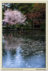 石川の壁紙プレビュー
