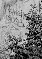 """Smells Good"" Geranium (aweiss.sf) Tags: sanfrancisco california pen graffiti blackwhite kodak olympus balmyalley penft bw400cn"