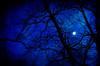 Somewhere Between Dusk & Night (Truebritgal) Tags: longexposure blue ohio moon black tree nature silhouette night lens star spring nikon scenery bright outdoor dusk bare branches astro nighttime astrophotography magical vignette lunar dusky jewett 20secs d7000 tamronspaf1750mmf28xrdillvc truebritgal