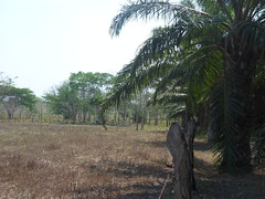 SAM_1947 (ensepens) Tags: potrero palma candelaria secas cedro