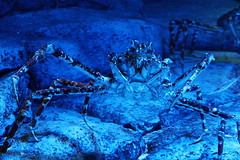 gimp linux seaaquarium resortsworldsentosa darktable