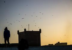 Essaouira at sunset (krllx) Tags: africa marokko scalatheport backlight bird essaouira light lights mainsquare morocco nature seagull silhouettes solnedgang street streetphotography sundown sunset tower dsc04353201603081