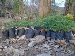 small trees (Sasha India) Tags:              ometepeisland ometepe nicaragua journey travel             eljardindelavida puntagorda balgue