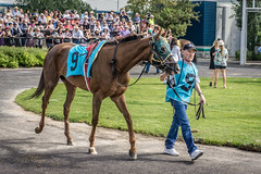 "Canadian Derby - Edmonton 2016 (IQRemix) Tags: horse thoroughbred racing edmonton alberta northlands ""northlands park"" yeg horseracing jockey derby race sport 马 馬 caballo cheval canadianderby canada"