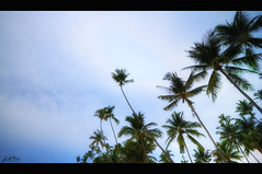 IMG_6422 (jlpvina) Tags: leo vina photography canon eos philippines pilipinas visayas bohol amorita