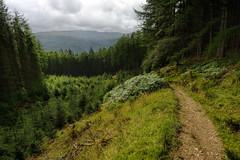 Heading Downhill (Click And Pray) Tags: managedbyclickandpraysflickrmanagr scotland scottish argyll descending pucksglen forest woodland landscape landscapeformat intothedistance path track footpath rural remote kilmun scotlandscottishargylldescendingpucksglenforestwoodlandlandscapelandscapeformatintothedistancepathtrackfootpathruralremotekilmunupperpucksglengbr