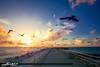 Sunrise Jupiter Inlet Pigeons Over the Jetty (Captain Kimo) Tags: captainkimo florida hdrphotography hdrsoftware jupiterinlet lovefl pigeon singleexposurehdr southflorida sunrise
