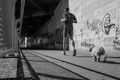 just one follower (moltofredo) Tags: bw black white sw schwarz weiss noiretblanc monochrome street streetlife streetphotography