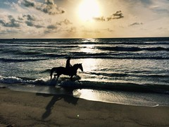 Amazing one!!! Sunset Riding over Beach at Phuket, Thailand (Captured by Bachi) Tags: phuket thai thailand traveldiary traveller tourism tourist travel horseriding equestrain evening red sun sunset me new beach polo canter gallop riding horses horse