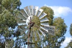 Goold, Shapley & Muir Ideal windmill; Queensland, Australia (sarracenia.flava) Tags: goold shapley muir brandford canada ideal windmill toowoomba darling downs australia queensland