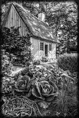 La Maison Acadienne - amazing garden outside the potager (Brett of Binnshire) Tags: historicbuilding cottage flowers plants highdynamicrange novascotia garden hdr lrhdr manipulations house lightroomhdr architecture canada potager fundycoast historicalsite locationrecorded annapolisroyal bw