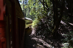 Skunk Train In Woods (rschnaible) Tags: willits california northern west western us usa skunk train woods outdoors sightseeing tour tourist vehicle transportation