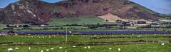 Round Wales Walk 48 - Tywyn Solar Farm (Nikki & Tom) Tags: waleswalescoastpath roundwaleswalk uk gwynedd hills solarfarm landscape campsite sheep fields