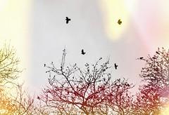 * (PattyK.) Tags: ioannina giannena giannina greece birds january 2014 ilovephotography