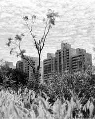 DGSNTreeAptTwrs (Lig Ynnek) Tags: seoul southkorea dangsan bnw blackenedwhite 120 mediumformat pentax67 px125 film analog apartment building tree sky