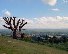 Surrey Hills (groovyjs86) Tags: panorama tree sky clouds kodak ektar mamiyarz67proii