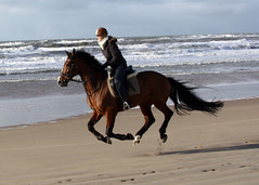 On the Beach 14 (Samantha Louise Knott) Tags: ocean sea horse woman holland beach netherlands girl sand ride riding pony rider gallop