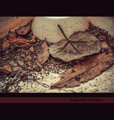 Les feuilles mortes (in eva vae) Tags: autumn red brown macro closeup nikon dof pov deadleaves squared preset topsoil ligtroom inevavae