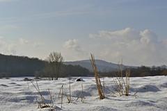 _DSC6924 Winterlandschaft-winter landscape (baerli08ww) Tags: schnee winter sun snow clouds forest germany landscape deutschland nikon day tag wolken landschaft sonne wald rheinlandpfalz westerwald rhinelandpalatinate westerforest