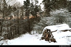 eingedeckt (H. Eisenreich Foto) Tags: wood schnee winter forest landscape bavaria dawn nikon timber hans lila upper pile dmmerung wald horizont oberpfalz hlz winterlandschaft holzstapel palatinate hoizon kald vilstal schmidmhlen eisenreich holzstos mygearandme