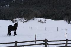 SAM_4630 (faria.leos) Tags: snow nx bruneck nx2000