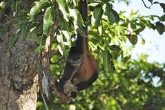 DSC_2880 (Debbie Prediger Photography) Tags: trip travel canada photography tour wildlife alberta nicaragua debbie cadogan prediger