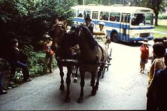 PRAHA Juni 1980 pic109 (streamer020nl) Tags: wedding horse bus prague prag praha 1980 cssr