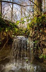 Sunlit Winter Stream (Rusty Marvin - JohnWoracker.com) Tags: fern tree green nature forest woodland waterfall moss woods stream hand blackberry falling foam trunk ferns splash stitched ibjport