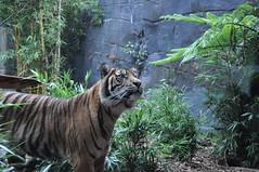 Taronga Zoo (wiifm) Tags: sydney australia tarongazoo