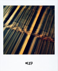 "#DailyPolaroid of 12-2-13 #137 • <a style=""font-size:0.8em;"" href=""http://www.flickr.com/photos/47939785@N05/8482561658/"" target=""_blank"">View on Flickr</a>"