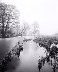 Derbyshire Wye - Reed Mace Bed - Below Meaden (Regular Rod) Tags: morning winter blackandwhite mist tree water fog river fishing derbyshire peakdistrict 8x10 willow flyfishing willows bakewell array alders fomapan shenhao semistand ysplix rnbderbyshirewye pyrocatechol derbyshirewye catechol obsidianaqua filmdev:recipe=8946