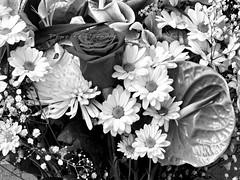 "DETALLES CERCANOS - PAISAJES INTERIORES (33) Bouquet (CODIGO DE LUZ ""El Fotgrafo"") Tags: blackandwhite bw stilllife flores byn blancoynegro plantas bouquet margaritas texturas exposicin brancoepreto naturalezamuerta ramodeflores bookfotogrfico pepegutirrez cdigodeluz pgutirrez detallescercanospaisajesinteriores llamanovios"