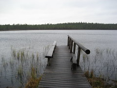 Kotajrvi (dusan.ovi) Tags: autumn lake nature grass forest fence suomi finland bench nationalpark swamp 2007 keskisuomi saarijrvi pyhhkki forestresort centralfinland pyhhkkinationalpark pyhhkinkansallispuisto pyhahakki kotajrvi