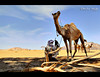 Break Time ! (Bashar Shglila) Tags: life city trees light shadow portrait sky mountains sahara desert natural dunes daily camel libya shepard tuareg ghat جمال راعي صحراء جبل وادي ليبيا رمال libië libiya غات ليبي توارق كاف تارقية تينيري mygearandme mygearandmepremium mygearandmebronze mygearandmesilver mygearandmegold mygearandmeplatinum ادينان mygearandmediamond ايموهاغ potd:country=menaar