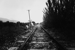 (nasos zovo) Tags: portrait bw white black look train lost hope blackwhite back you grain railway away greece re ok soon nasoszovo