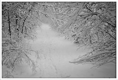 March, 19: 2013; snow landscape in Dresden (nyselliene) Tags: schnee winter blackandwhite white snow tree nature forest germany de deutschland dresden europa europe noiretblanc natur neige moor wald weiss weg lande dresdnerheide nikond700