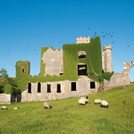 "Clifden Castle Crows <a style=""margin-left:10px; font-size:0.8em;"" href=""http://www.flickr.com/photos/89335711@N00/8596270574/"" target=""_blank"">@flickr</a>"