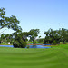 Golf in the Golden Isles