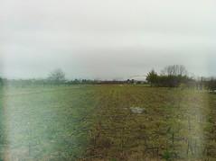 piove. in estate  tutto dorato. (letteramuta) Tags: trees sky verde home me grass rain alberi photography casa italia grigio erba mais cielo pioggia ragazza 2013