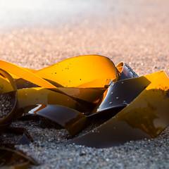 SeaFilm/FlimSea (Erik Furulund) Tags: sea orange seaweed film beach yellow cat 35mm canon square photography photo sand kitten kat pattern cut kittens squareformat 7d katt funnycats filmrolls cudly erikf cuttingroomfloor cutscenes furulund canon7d interveave erikfurulund erikfurulundphotography furuhue morsomkatt