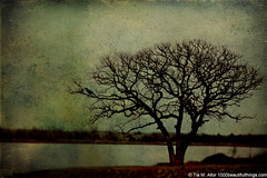 In the Sea of Tranquility (1000 Beautiful Things ~ Photography by Tia) Tags: lake tree texture oklahoma tia peace photographer tranquility calm serenity 365 oklahomacity project365 365days tiabailey tiambailey 1000beautifulthingscom tiaallor