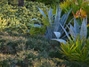 Florida plants 2_ 2011 sm (Terryryan1) Tags: garden florida tropical kissimmee orangelake plantingdesign favoritegarden