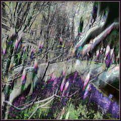 Urban Spring: Magnolias (Tim Noonan) Tags: street flowers trees green texture wet digital photoshop buildings grey shapes violet magnolia hue mosca hypothetical crmedelacrme quadrado vividimagination justimagine artdigital greenscene shockofthenew stickybeak sharingart awardtree artforfun arttate davincimemories maxfudgeawardandexcellencegroup exoticimage digitalartscene admintalkinternational netartii kreativepeople soulocreativity stickymaximus